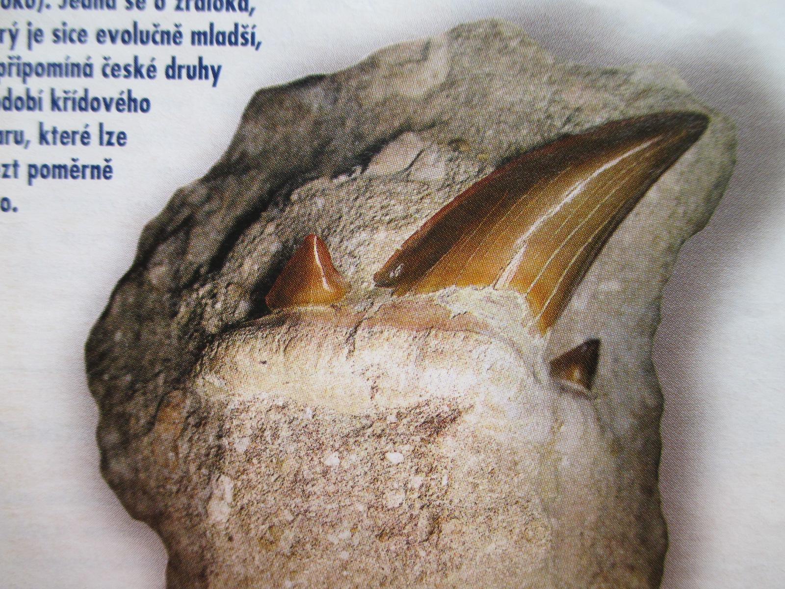 žraločí zub z lomu