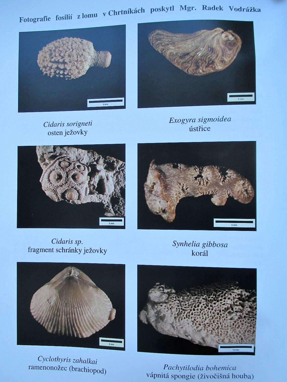 fosílie lom Chrtníky