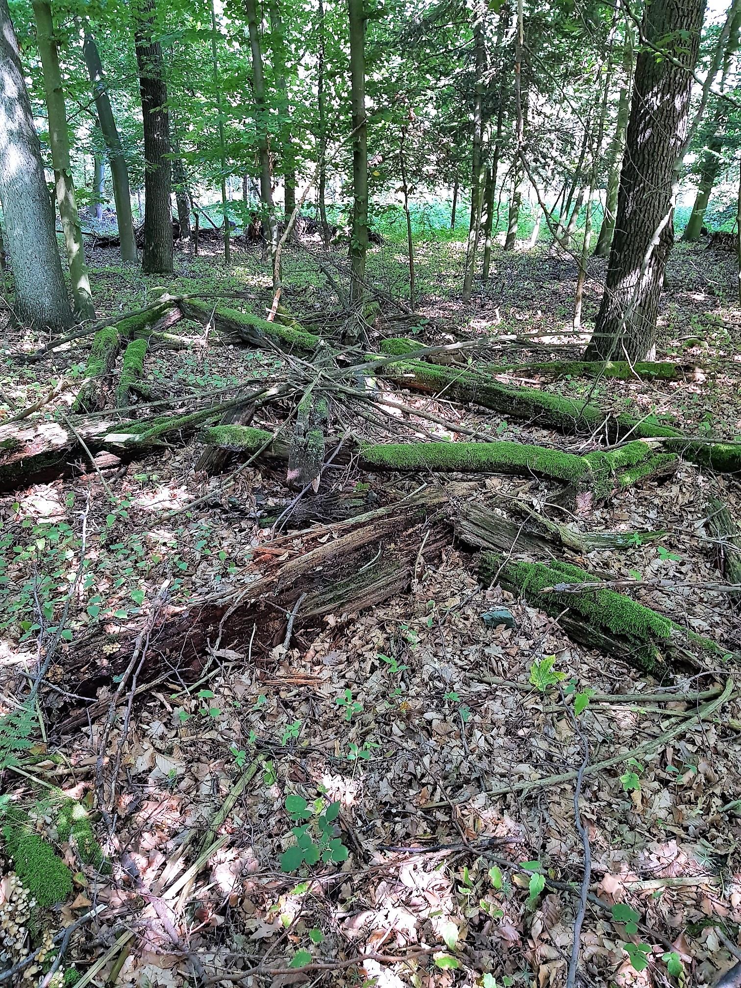 zbytky starého dřevěného zámeckého altánku v oboře